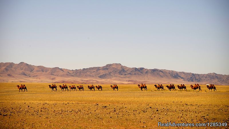 Image #23/26 | Staying With Mongolian Nomads Family Tour