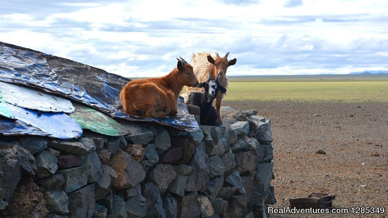 Image #25/26 | Staying With Mongolian Nomads Family Tour