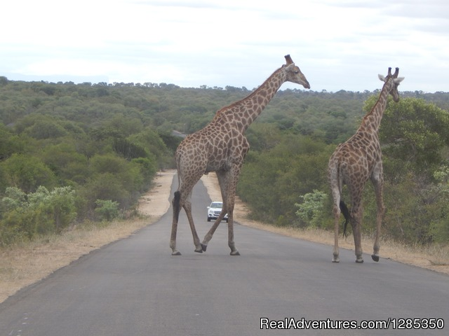Kruger Park Tours Kruger National Park, South Africa Sight-Seeing Tours