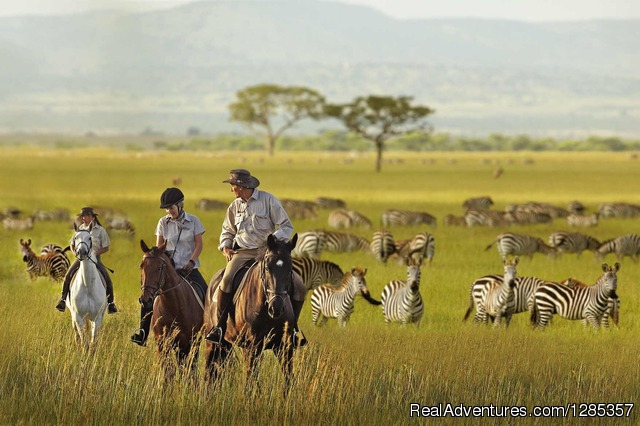 - Sayari Tano Tours & Safaris