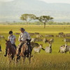 Sayari Tano Tours & Safaris