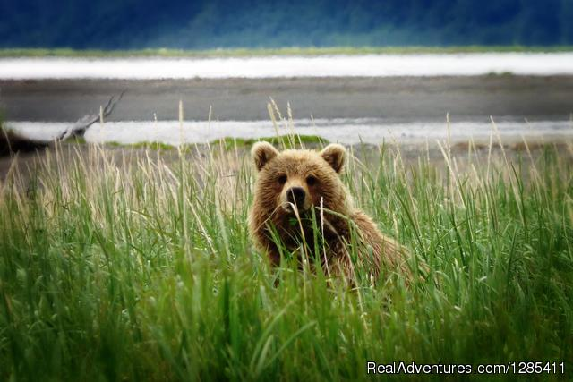 optional bear viewing at Lake Clark - Alaska, Canada, USA in a converted school bus