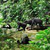 Inspired Gorilla safari & volunteer
