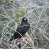 Authentic Everglades  Airboat Wildlife Tours