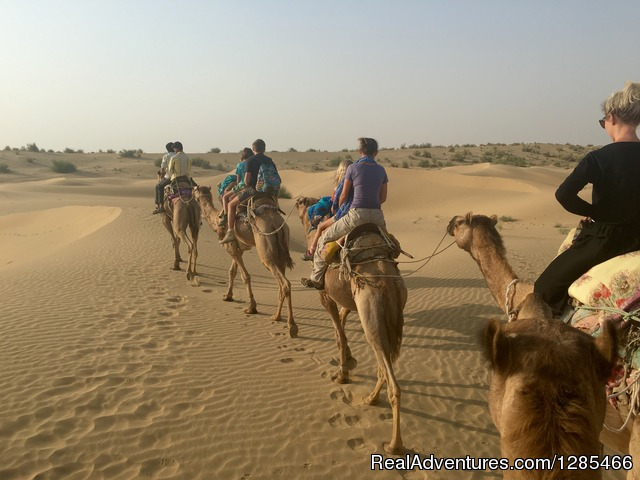 Camel and Desert - Wanderlust Camel Safari