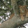 Kagera Safaris - Gorilla and Wildlife Safaris