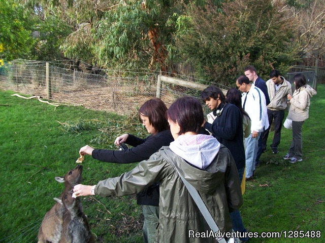 Animal Feeding - Phillip Island Australia Wildlife Adventure Tours