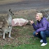 Phillip Island Australia Wildlife Adventure Tours