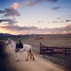 Exclusive Horseback adventures Cromwell & Arrowtow