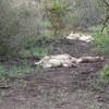 Ntandokazi Tours (Safaris &Tours)