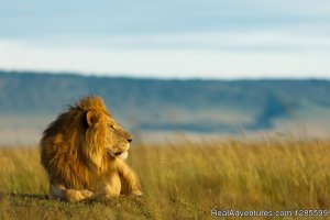 Foot Slopes Tours & Safaris Arusha, Tanzania Wildlife & Safari Tours