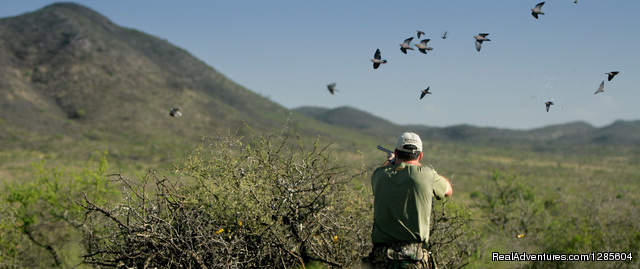 Best Wingshooting In Argentina Hunting Trips Cordoba Province, Argentina