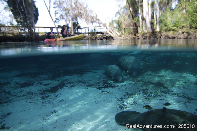 Aquavision Manatee Boat Tours: Kayaking in the Crystal River