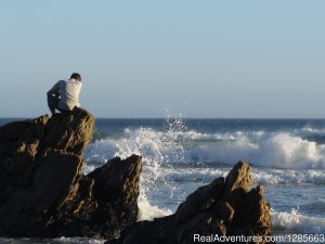 White shark conservation and research volunteer Hermanus, South Africa Volunteer Vacations