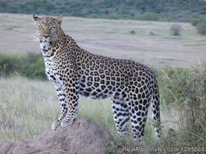 Allbound Holidays - Let's Explore Together Nairobi, Kenya Sight-Seeing Tours