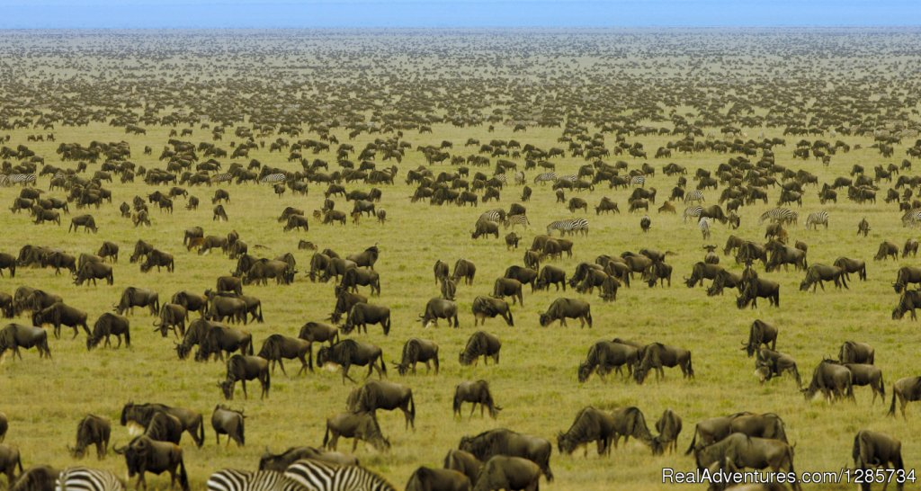 Serengeti national park migration