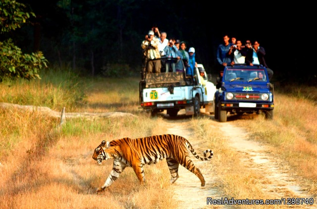 Weekend Escape to Jim Corbett National Park