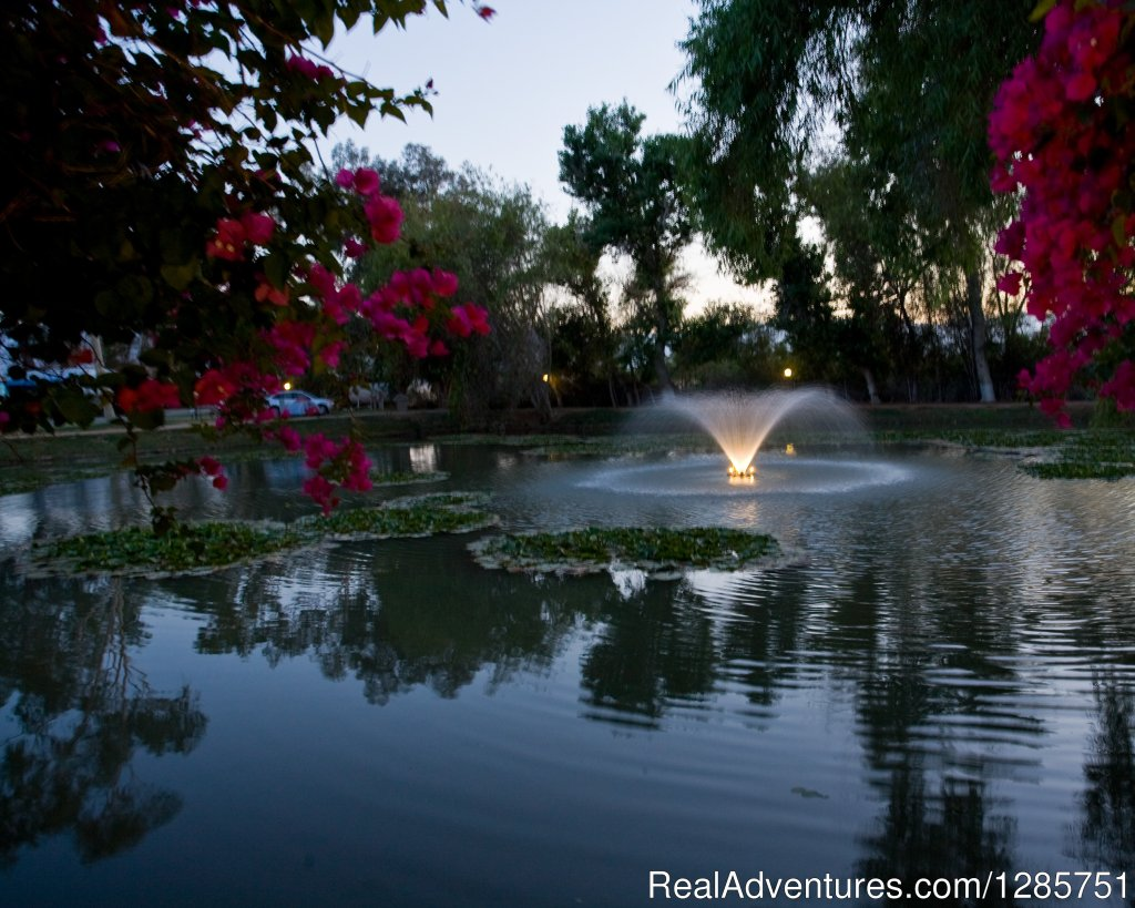 Fountain and pond at night | Image #2/7 | Shadow Hill RV Resort