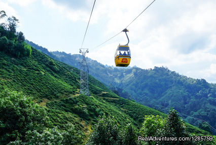 Mesmerizing Darjeeling with Gangtok Tour