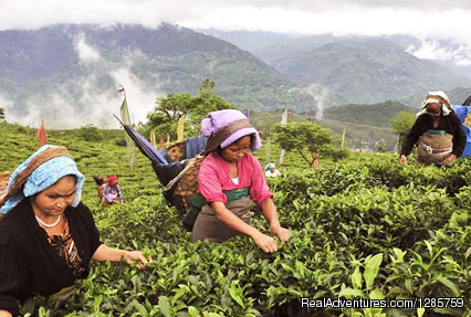 Mesmerizing Darjeeling with Gangtok Tour