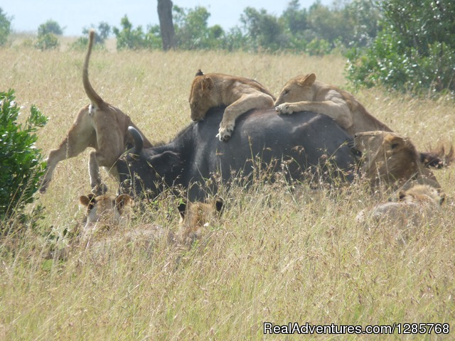 enchoro wildlife camp masai mara Apartment in nairobi, nairobi county, kenya - enchoro wildlife camp - vacation rentals by travelmob.