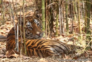JUNGLEWALA Safaris & Escapes Wildlife & Safari Tours Indore, India