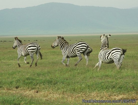 4Day Safari to see Big 5