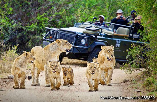 Scheduled Kruger Panoramic Experience | Image #4/8 | Chalo South Africa