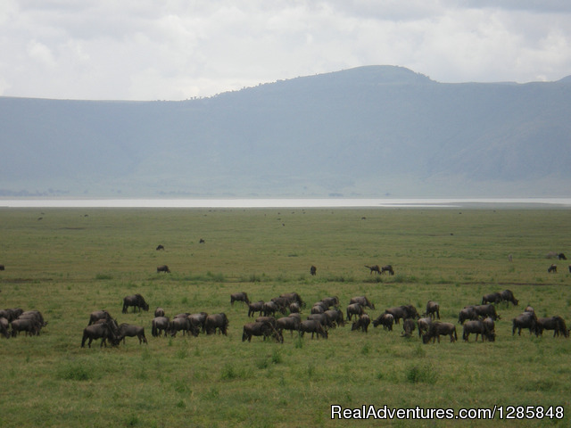 5 Days Join Group Manyara, Serengeti, Ngorongoro,