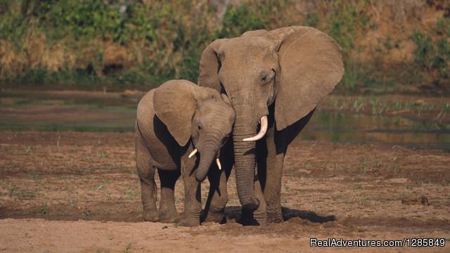 Budget Masai Mara Safaris, Tours & Trips