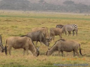 Holiday Tour Packages Nairobi, Kenya Sight-Seeing Tours