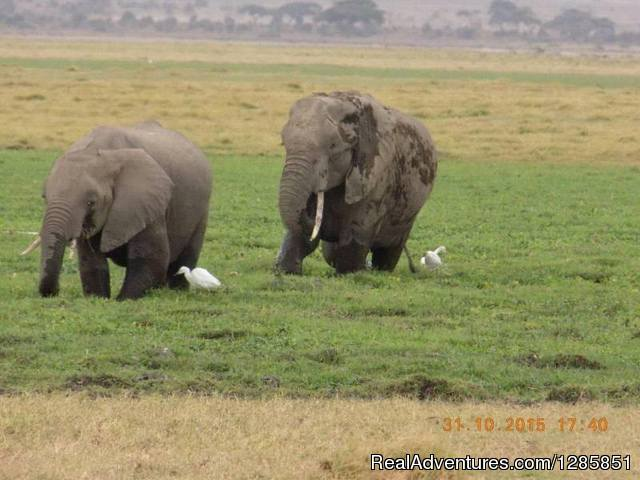 Maasai Mara Safari - Holiday Tour Packages