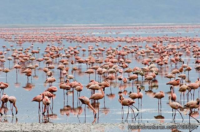 Lake nakuru - Holiday Tour Packages