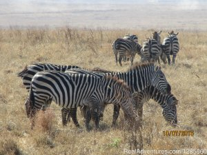 Discover Next Adventures Arusha, Tanzania Sight-Seeing Tours