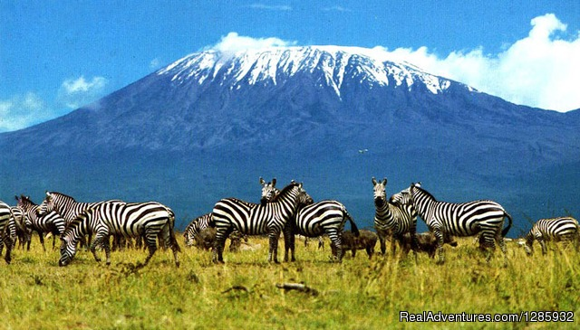 Enjoy the nature - Kilimanjaro climb from $1196 by local operator