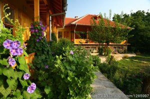 Pelican Birding Lodge/ Accommodation & Wildlife Vetren, Bulgaria Bed & Breakfasts