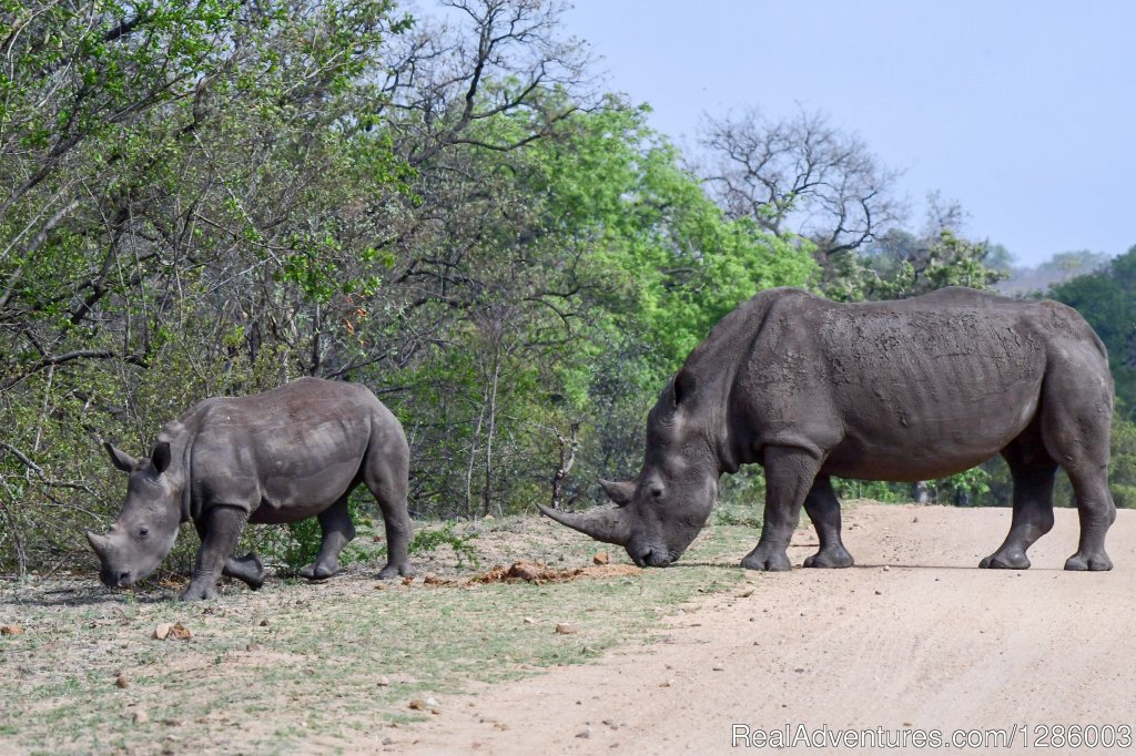 Rhino mother and her calf | Image #1/16 | Hazyview, South Africa | Wildlife & Safari Tours | Private Kruger Park open vehicle safaris