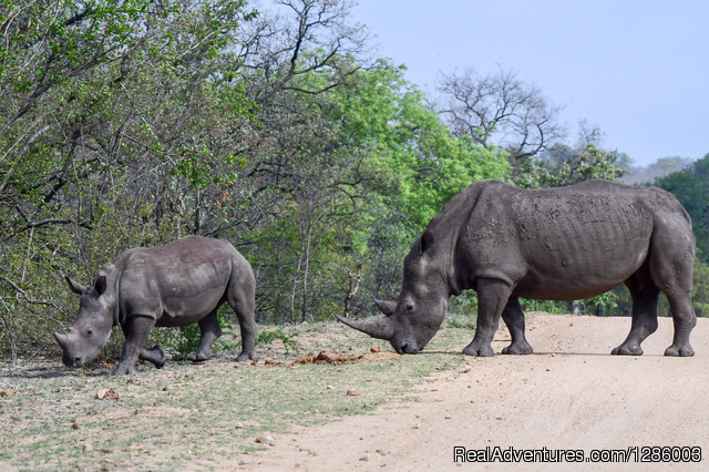 Private Kruger Park open vehicle safaris Hazyview, South Africa Wildlife & Safari Tours