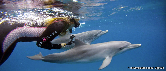 Wild dolphin snorkel cruise to Bahamas: Atlantic spotted dolphins on a Wild Ocean Adventures trip