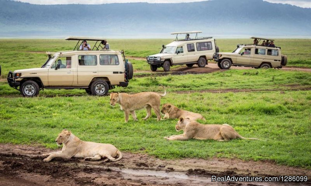 Tanzania Tours and travels
