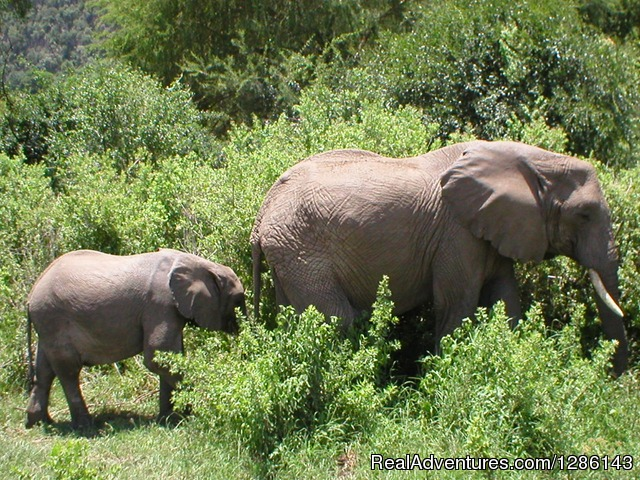 Mother, baby elephants, Lake Manyara - Safari, Maasai Development Project