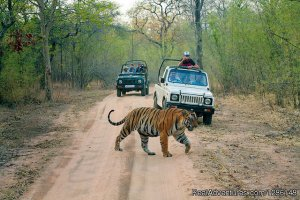 Experience Culture and Heritage New Delhi, India Wildlife & Safari Tours
