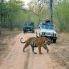Experience Culture and Heritage Ranthambhore Safari