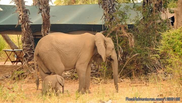 Elephants In Tarangire | Image #5/8 | Migration Safaris In Tanzania 10 Days / 9 Nights