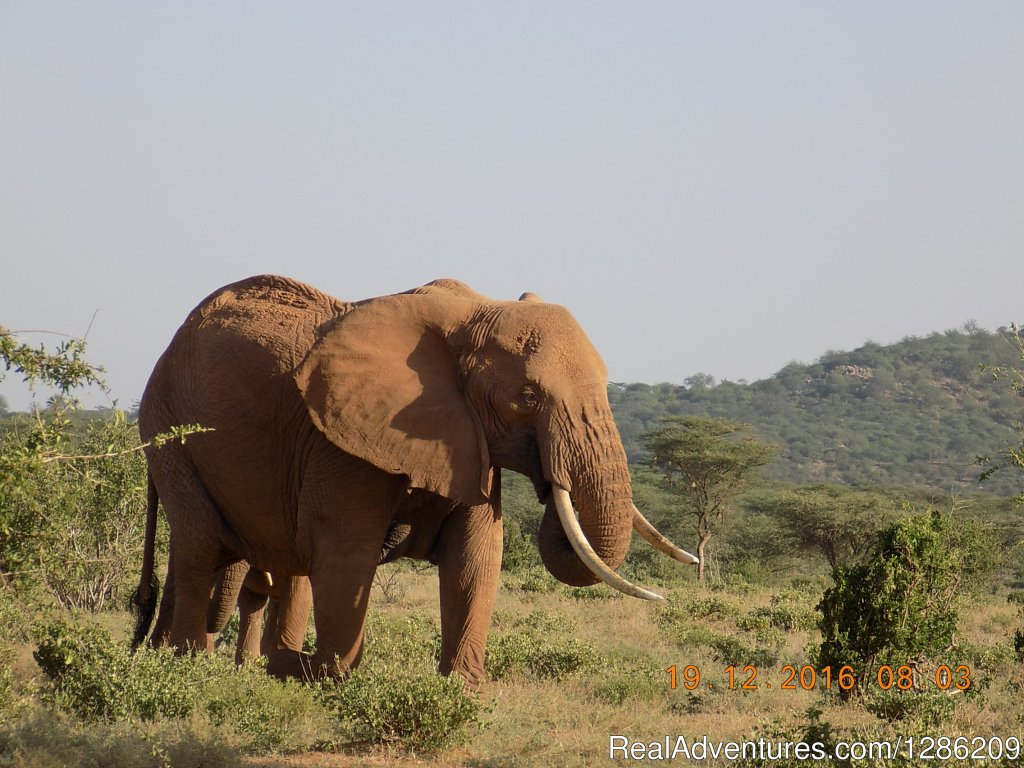 Among the Big Five Family | Image #12/19 | 5 Days Kenya Budget Safari Maasai Mara & Amboseli