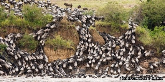 Get an Extraordinary privilege of traveling on safari in Tanzania during the Great Migration period where wildebeest, zebra and other spectacular wildlife move from the Serengeti in northern Tanzania into the Masai Mara in southern Kenya.