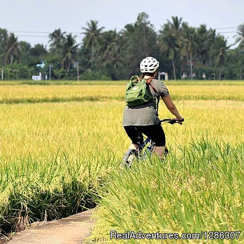 The beautiful biking along the trails of the beaten tracks, to the villages of local authentic Vietnam, the vast green rice fields, the buffalos with children, the maze of canals full of water coconut. The trip is around 50km, flat with easy road.