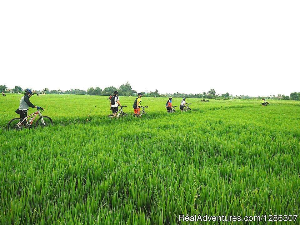 Cycling in the middle of rice farm | Image #4/4 | Easy cycling to rice farms Mekong Delta Vietnam