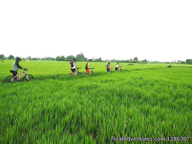 Easy cycling to rice farms Mekong Delta Vietnam