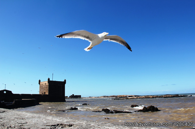 Essaouira sigths - Berberway Moroccotours : Go deep in Morocco